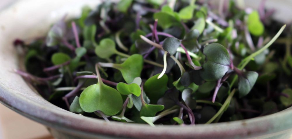 True Leaf Microgreens, Pottstown, PA – 17 miles